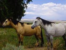 Dois cavalos Imagem de Stock Royalty Free
