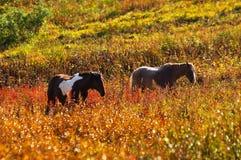 Dois cavalos. Imagem de Stock