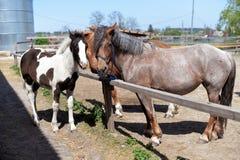 Dois cavalos bonitos com uma juba da cor branca e marrom foto de stock royalty free
