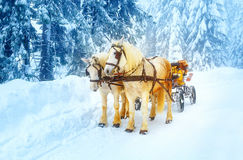 Dois cavalos brancos bonitos na paisagem do inverno da montanha fotografia de stock