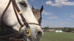 Dois cavalos de equitação que interagem vídeos de arquivo