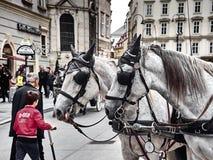 Dois cavalos de um transporte em Stephansplatz foto de stock royalty free