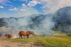 Dois cavalos em um pasto Imagem de Stock