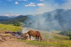 Dois cavalos em um pasto Imagem de Stock Royalty Free