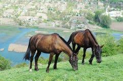 Dois cavalos no prado fotos de stock royalty free