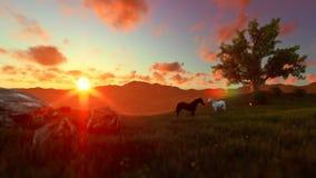 Dois cavalos no prado e na árvore de vida verdes, por do sol bonito ilustração stock
