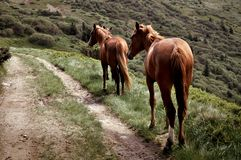 Dois cavalos perto da estrada fotos de stock