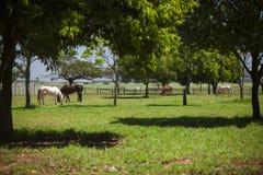 Dois cavalos que comem no prado no dia ensolarado Fotos de Stock