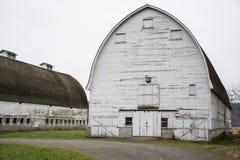 Dois celeiros brancos Fotografia de Stock Royalty Free