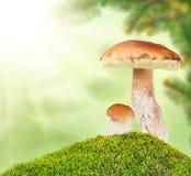 Dois cepa-de-bordéus no musgo no fundo claro Imagens de Stock Royalty Free