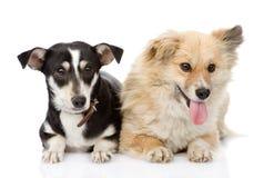 Dois cães que encontram-se junto Fotos de Stock