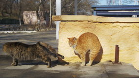 Dois cinzentos e gatos desabrigados vermelhos na rua na mola adiantada filme