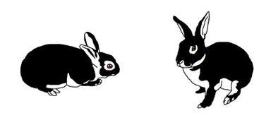 Dois coelhos fotografia de stock royalty free