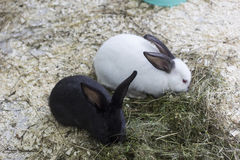 Dois coelhos imagens de stock royalty free