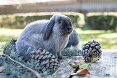 Dois coelhos bonitos pet o passeio em uma tabela de madeira com outdoo dos pinhos foto de stock royalty free