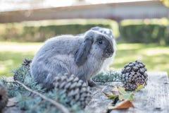 Dois coelhos bonitos pet o passeio em uma tabela de madeira com outdoo dos pinhos imagem de stock