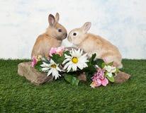 Dois coelhos do bebê Fotos de Stock Royalty Free