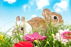 Dois coelhos do bebê em um campo de flor Foto de Stock Royalty Free