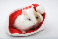 Dois coelhos do bebê estão olhando o Imagem de Stock