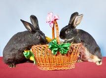 Dois coelhos estão tentando obter na cesta decorada com fitas Imagens de Stock Royalty Free