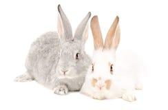 Dois coelhos que sentam-se junto Fotos de Stock