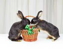 Dois coelhos são baseados os pés na cesta da Páscoa Fotografia de Stock