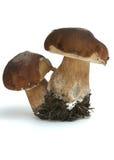 Dois cogumelos brancos estão em um fundo branco foto de stock