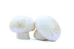 Dois cogumelos de campo isolados Fotos de Stock
