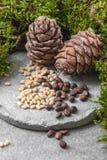 Dois cones e porcas do pinho em um fundo concreto cinzento imagens de stock