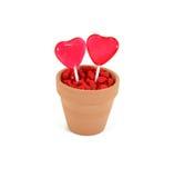 Dois corações crescem o amor Fotos de Stock