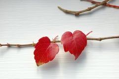 Dois corações naturais Imagens de Stock
