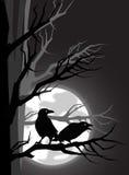 Dois corvos Imagem de Stock