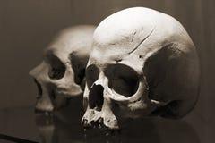 Dois crânios Fotografia de Stock Royalty Free