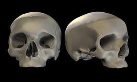 Dois crânios Ilustração do Vetor