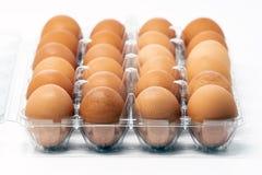 Dois dúzia ovos gaiola-livres orgânicos marrons imagem de stock royalty free