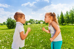 Dois dentes-de-leão do sopro das crianças fotos de stock royalty free