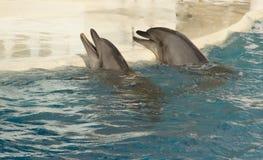 Dois dophins de sorriso Fotografia de Stock Royalty Free