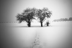 Dois e árvores de uma metade e um trajeto escondido Fotografia de Stock Royalty Free