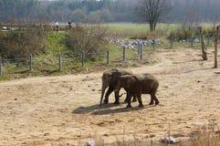 Dois elefantes Foto de Stock Royalty Free