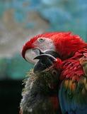 Dois em papagaios do amor. fotos de stock royalty free