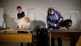 Dois empregados do centro canino são contratados em um corte de animais domésticos, eles fazem a preparação para cães vídeos de arquivo