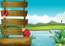 Dois erros no lago ilustração stock
