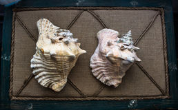 Dois escudos Foto de Stock