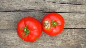 Dois estragaram tomates vermelhos maduros orgânicos com os pontos pretos no fundo de madeira da textura Doenças do tomate fotografia de stock