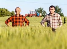 Dois fazendeiros em uma colheita de exame do trigo do campo imagens de stock