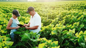 Dois fazendeiros homem e mulher estão trabalhando no campo no por do sol Inspecione as plantas, use uma tabuleta digital filme
