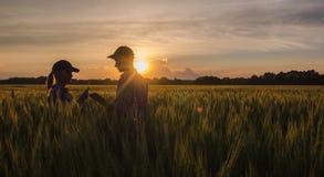 Dois fazendeiros homem e trabalho da mulher em um campo de trigo no por do sol fotografia de stock royalty free