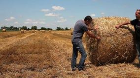 Dois fazendeiros que agitam as mãos no campo de trigo durante a colheita video estoque