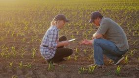 Dois fazendeiros trabalham no campo na noite antes do por do sol Inspecione os tiros verdes no campo, use uma tabuleta imagem de stock royalty free