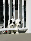 Dois filhotes de cachorro Fotografia de Stock Royalty Free